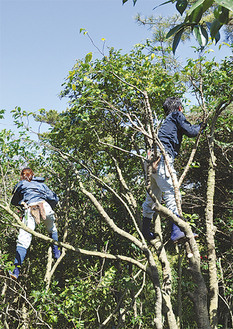 枝の剪定を行う職人