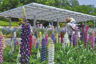 色とりどりの花を楽しむ来園者=5月14日撮影