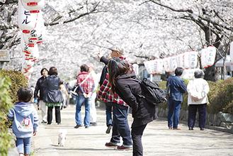 桜を楽しむ親子連れの姿も=4月1日撮影