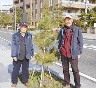 植樹した人の背丈ほどの松と市民の会会員ら
