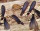 シロアリの羽アリ見落とすな