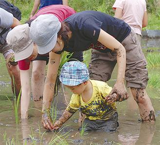 親子で協力して手作業で稲を植えていく
