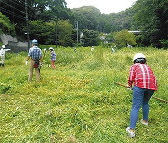 8月に鎌倉高校の生徒も参加した御谷山林の整備の様子(提供:同会)
