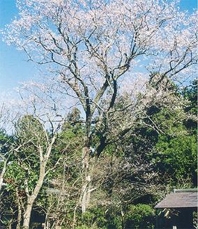 浄智寺のタチヒガン
