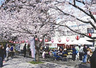 約110本の桜が見ごろを迎える