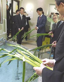 菖蒲を浴槽に入れる同クラブ会員ら