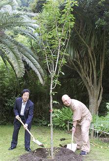 文学館前庭に2.5mの若木を植樹する富岡理事長(左)と大下一真副理事長