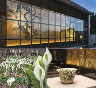 岡田美術館の貸切特別鑑賞湿生花園の水芭蕉を楽しむ