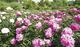 「日比谷花壇」が新愛称に