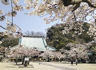 光明寺で恒例の観桜会