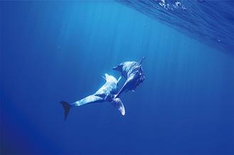 夏野さんが海中でイルカを撮影した作品