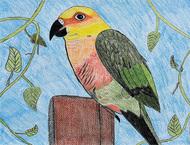 鳥への愛情鮮やかに描く