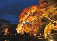 秋の夜間特別拝観
