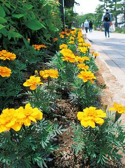 島森書店前に咲く花
