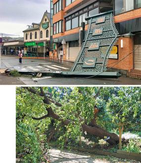 倒壊した御成通りのアーケード(上)、根こそぎ倒れた玉縄桜の原木