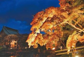 毎年人気の紅葉ライトアップ=長谷寺提供