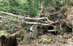 台風直後の天園ハイキングコース