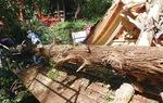 台風直後、屋根の一部が破損した拝殿