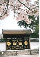 写真、講演、花見で親しむ桜