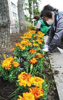 花植え作業に没頭する会員ら