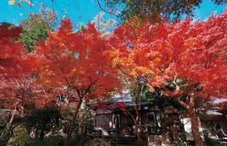 紅葉が見頃の時期の境内(覚園寺提供)