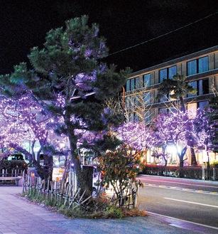 小町通りや若宮大路が桜色に