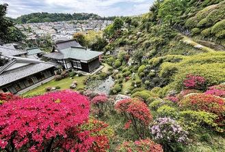 裏山の斜面に咲くツツジ=15日撮影
