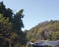 鎌倉と荘園〜山内荘(やまのうちのしょう)〜