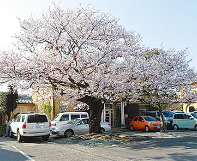 まち並み彩る樹木を表彰