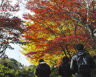 山あいに紅葉の訪れ