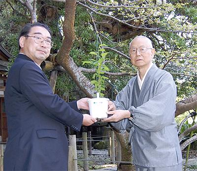 妙法桜 再生へ一歩
