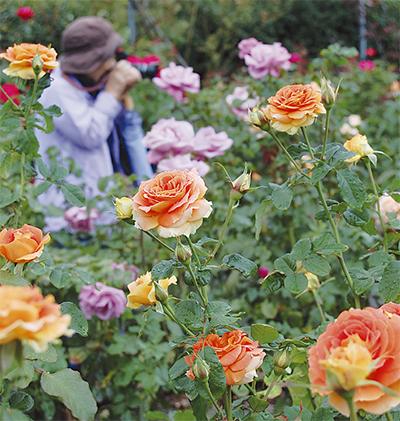 深まる秋に花の祭典
