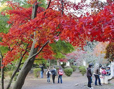紅葉が街を彩る