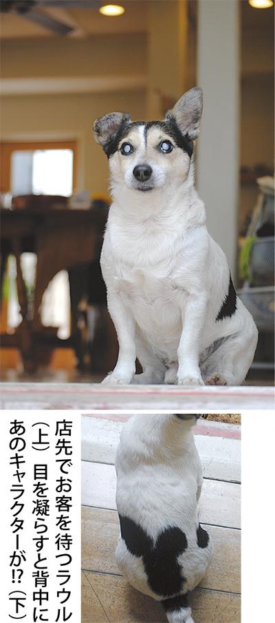 ハンデにも負けず...犬の店長さん奮闘中