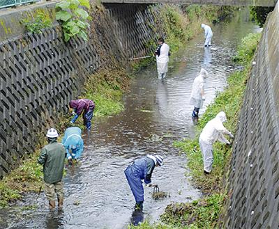 雨の中で新川清掃