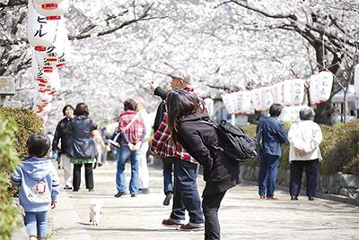 春の訪れ告げる「桜のトンネル」