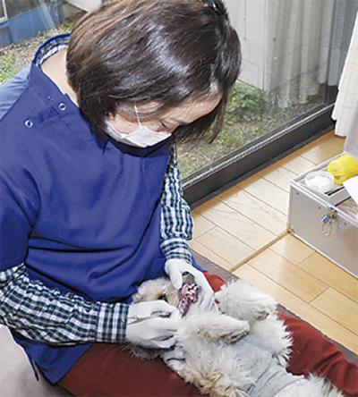 犬に優しい歯石除去