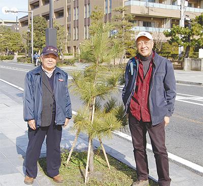 若宮大路への植樹完了