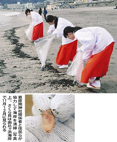 「恩返し」の海岸清掃