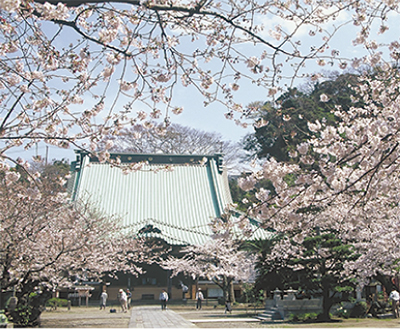 光明寺で「観桜会」