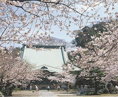 光明寺で観桜会
