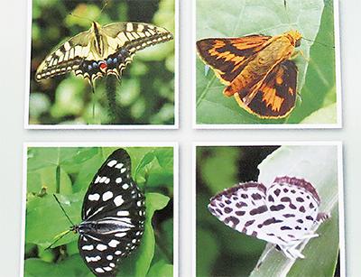 広町緑地の蝶54種が一冊に