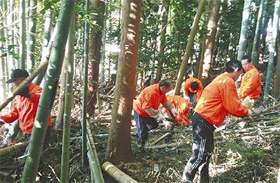 竹林に作業路を整備