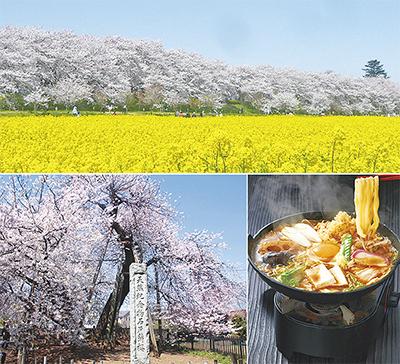 人気の桜づくし&桃の花観賞の旅