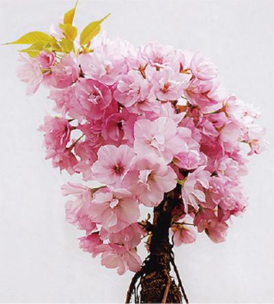 盆栽、鎌倉彫で楽しむ