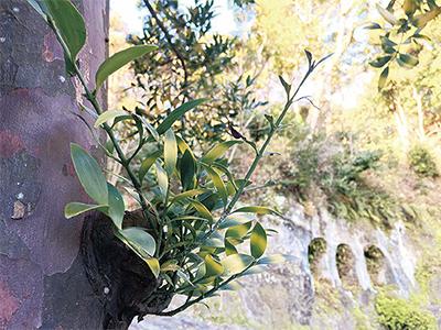 谷戸にたたずむ、神の宿る木