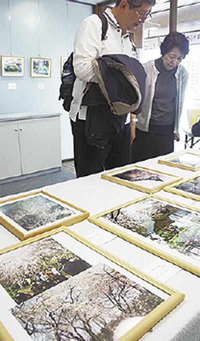 高柳さんが桜の写真展