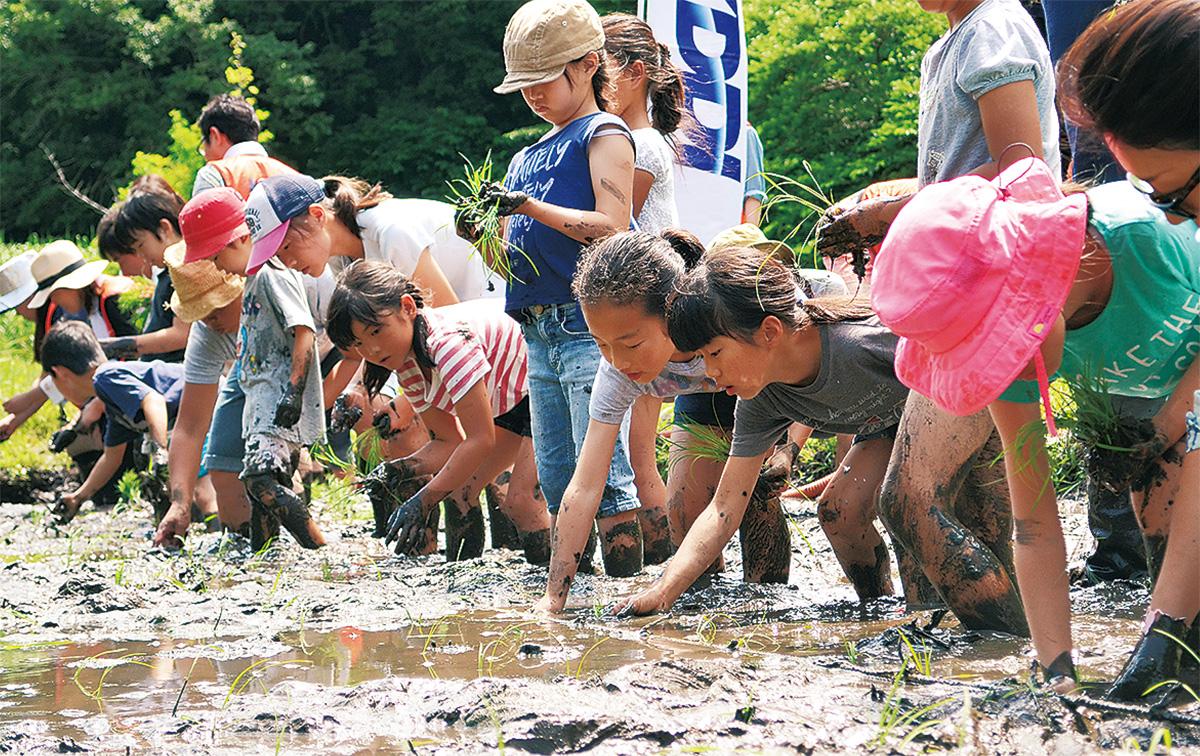 泥んこで田植え体験