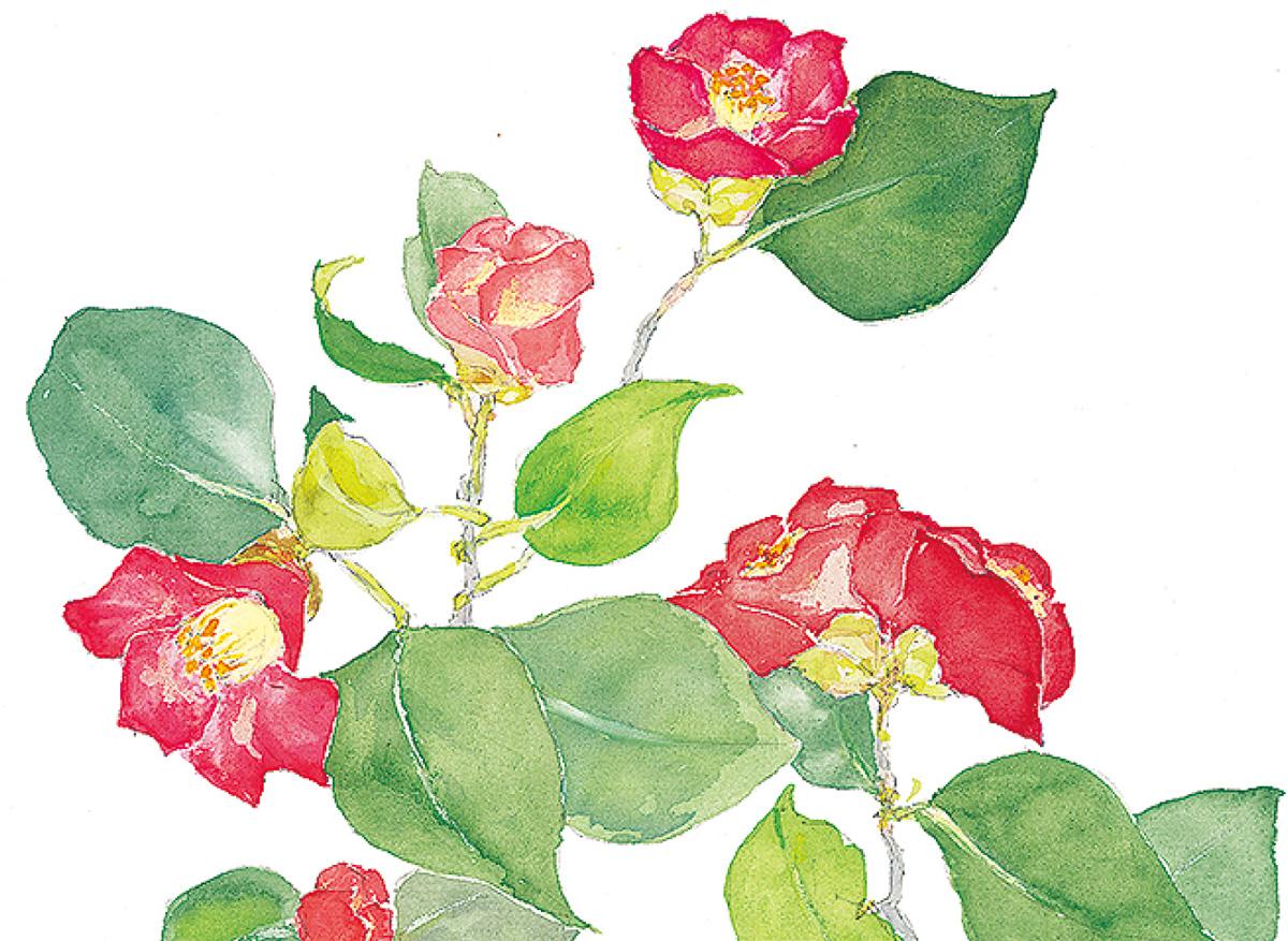 万葉の花を水彩で