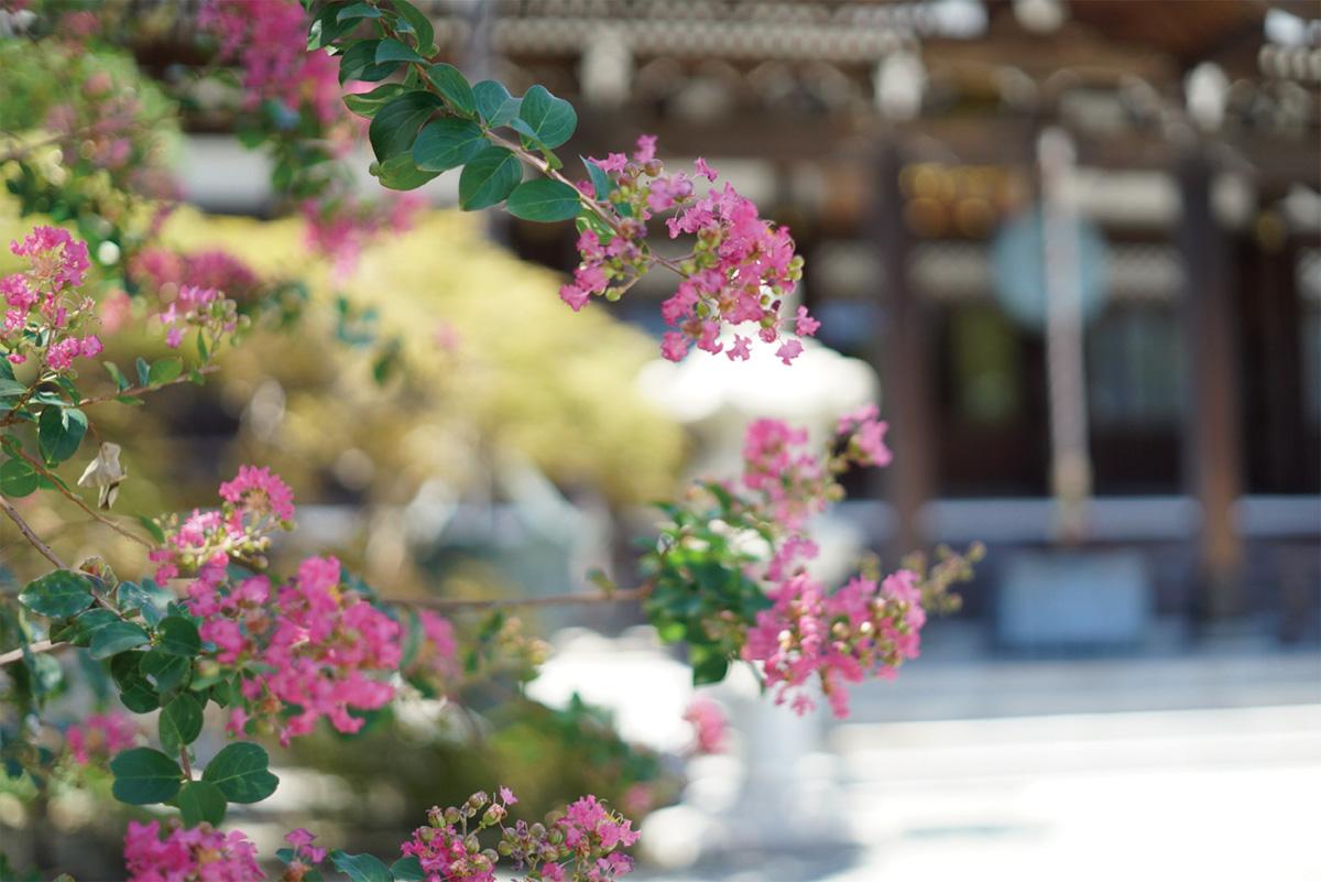 鎌倉花物語